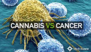 benefits of cannabis oil for cancer